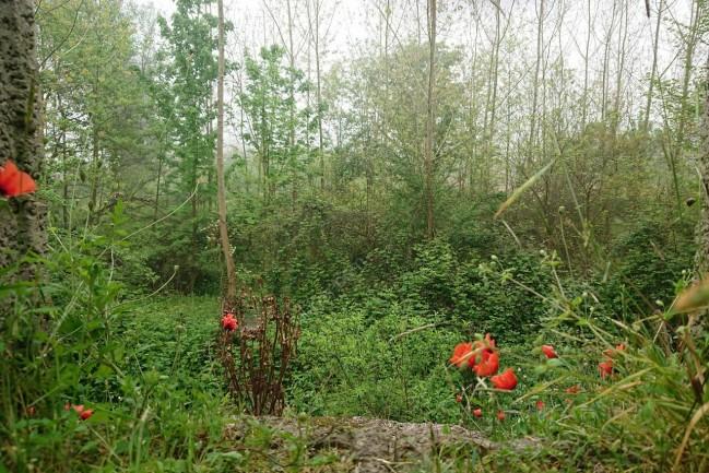 اجاره ویلای رو به جنگل (پر گل)