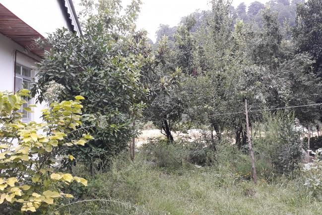 اجاره ویلا جنگلی در تالش شمال