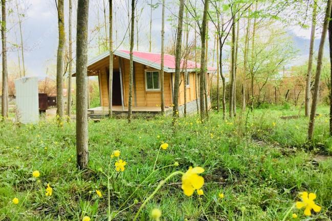 اجاره کلبه چوبی جنگلی در ماسال