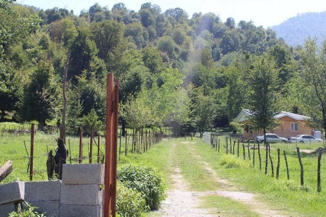 اجاره کلبه جنگلی ترنج