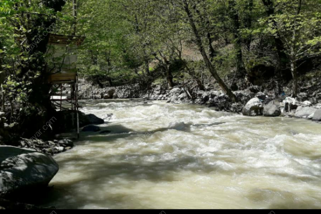 ویلا اجاره لب رودخانه داخل  جنگل