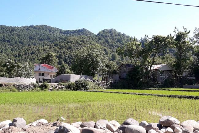 اجاره ویلا لوکس داخل جنگل نزدیک رودخانه