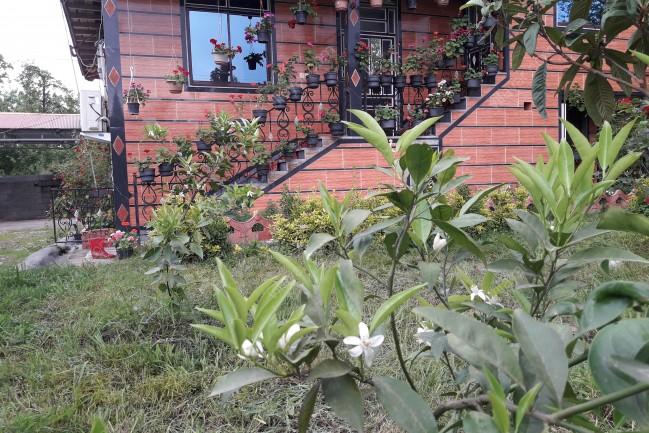 اجاره ویلا داخل باغ دربست در اسالم