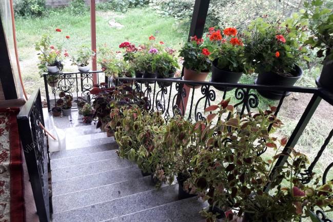 اجاره ویلا داخل باغ در اسالم استان گیلان