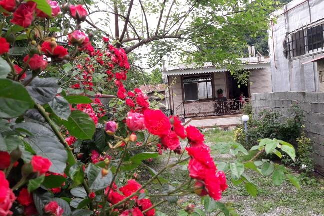 اجاره ویلا لوکس دربست داخل باغ در اسالم