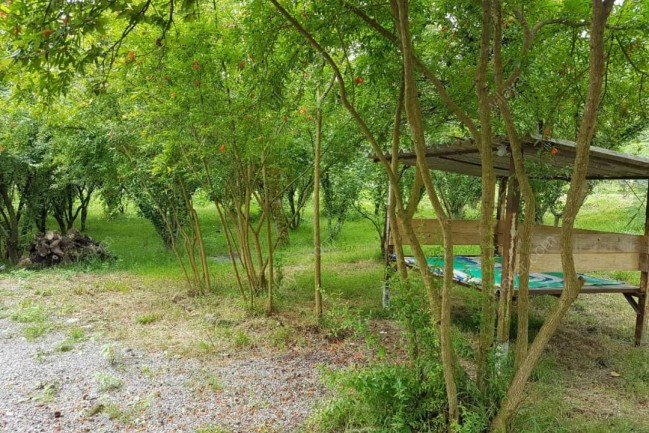 اجارع ویلا باغ جنگلی در هشتپر