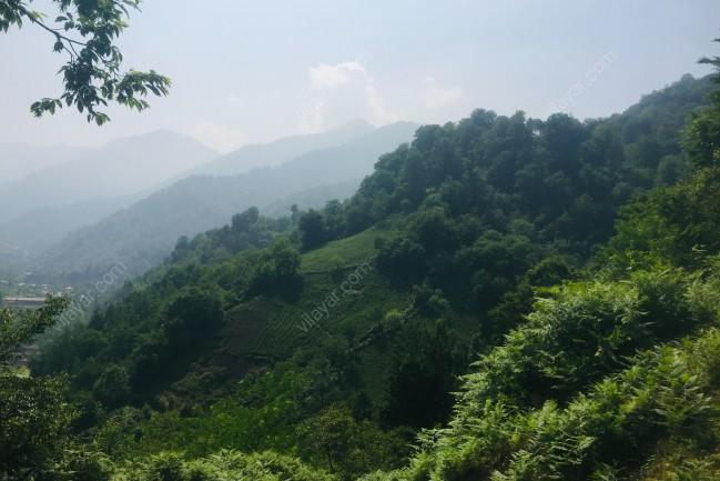 ویلای جنگلی در فوشه گیلان