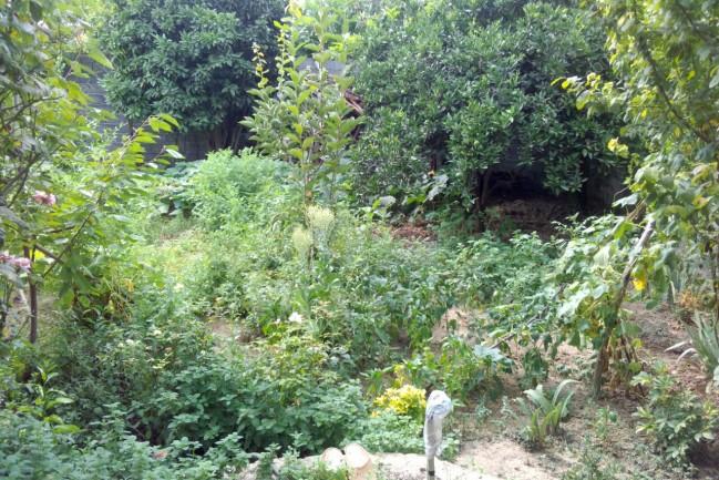 اجاره باغ ویلا در ساری