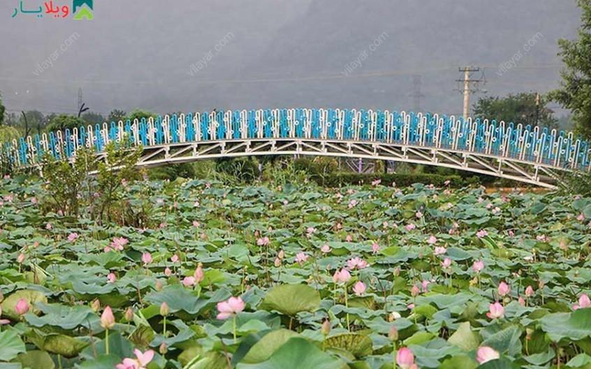 تالاب کیاکلایه و روایت سفری جذاب به این مکان