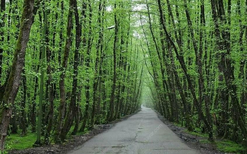 روستا و پارک جنگلی صفرا بسته