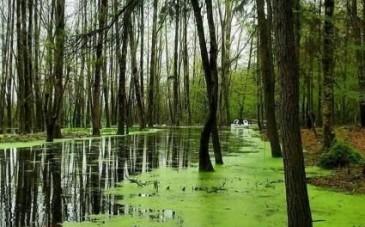 پارک جنگلی سراوان؛ جاذبهای رویایی در گیلان