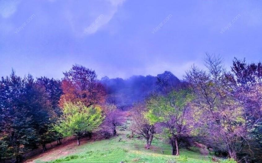 زیباییهای دیدنی جنگل نقله بر