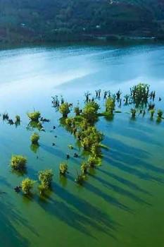 تماشای زیباییهای تالاب استیل آستارا