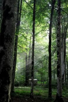 دهستان زیبا و توریستی  با چشمههای آبگرم لاویج