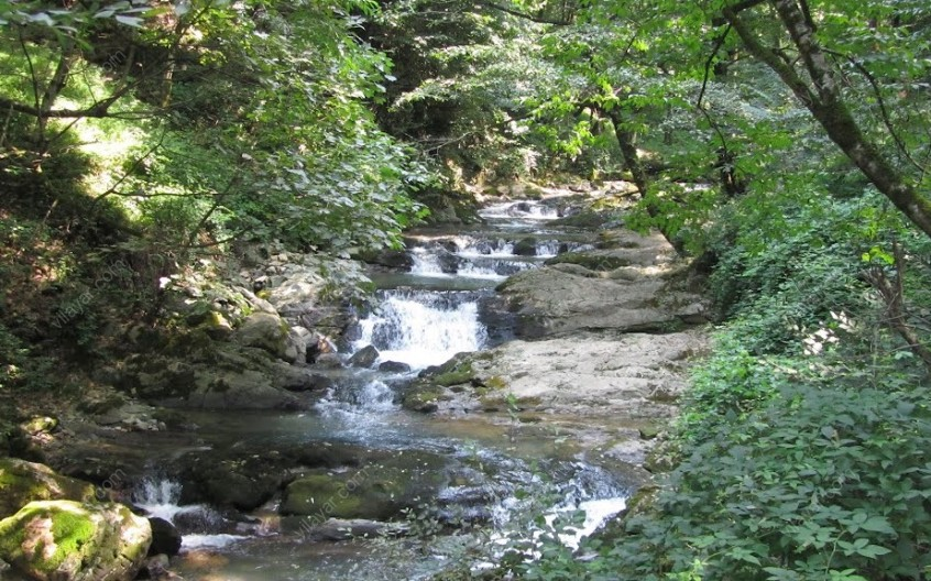 جلوههای زیبای پارک جنگلی سفید آب