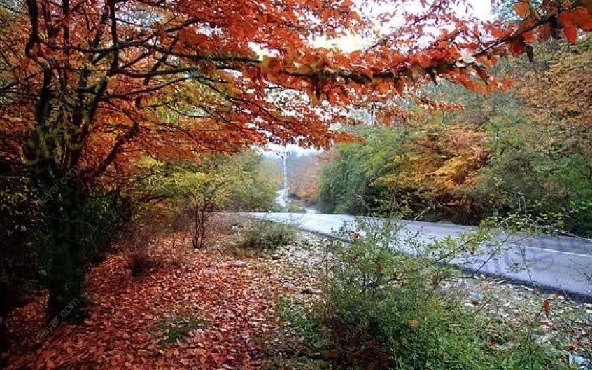 جنگل بلیران، بهشتی دیگر در مازندران