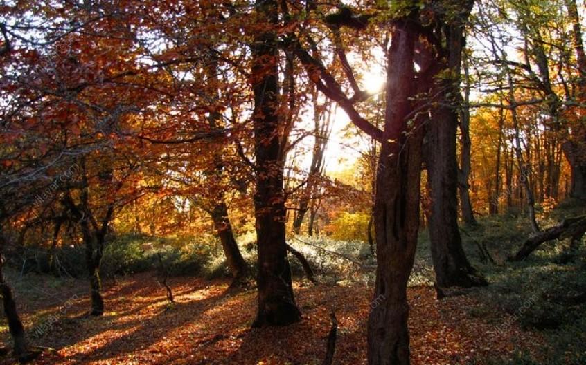 جنگل فوقالعاده زیبای الیمستان