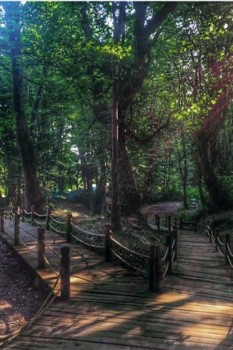 اجاره ویلا و لذت بردن از پارک جنگلی ناهارخوران