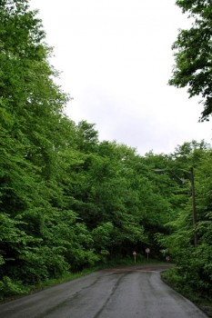 طبیعت دلچسب پارک جنگلی النگدره