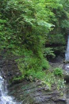 جنگل و آبشار زیارت