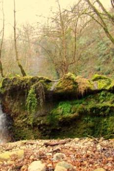 جنگل و آبشار رنگو