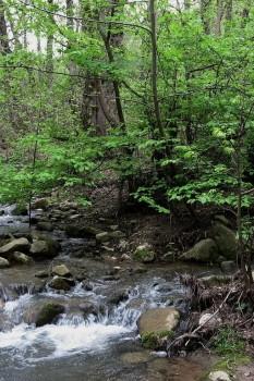 پارک جنگلی تنگه چهل چای