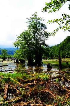 جنگل ارواح نوشهر در کجا واقع شده است