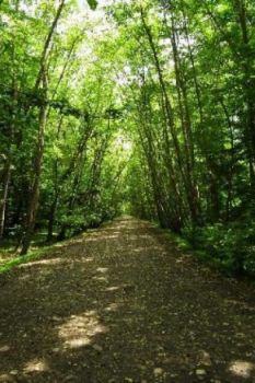 پارک جنگلی هلومسر در کدام استان واقع شده است؟