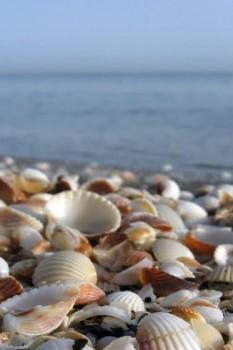 ساحل صدف؛ پدیده ای منحصر به فرد در رامسر