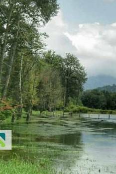 عکس ها و راهنمای سفر به دریاچه الندان نزدیک به ساری