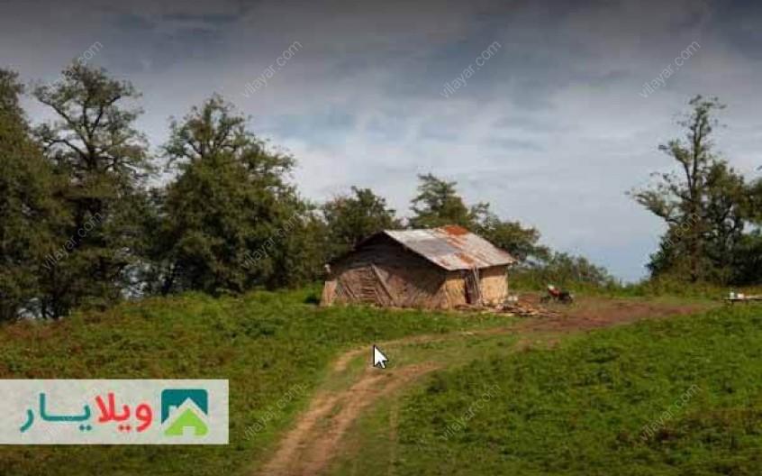 عکس ها و راهنمای سفر به جنگل دالخانی در رامسر