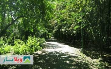 پارک جنگلی هلومسر به همراه تصاویر و راهنمای گردشگری