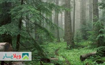 راهنمای پیک نیک یک روزه به جنگل سی سنگان نوشهر