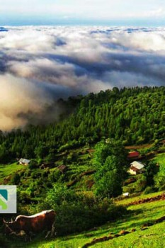 منطقه ییلاقی مازیچال، فرش ابر در کنار پاشنه کفش شما با رویایی ترین مناظر