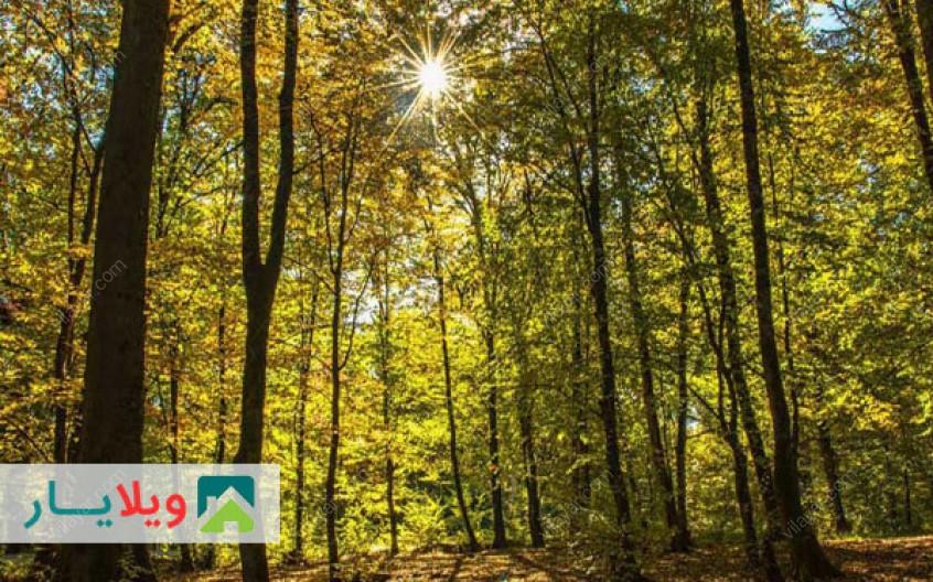 پارک جنگلی میرزا کوچکخان هراز  ( راهنمای کامل + عکس + توصیه ها )