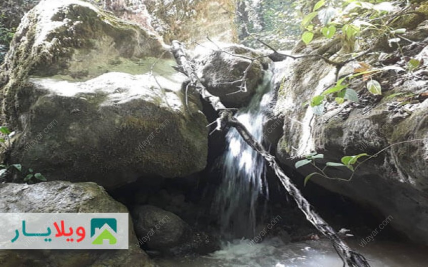 زیباترین تجربه جنگل گردی با جنگل هلی دار در کنار کوه و رود و هوای مه آلود