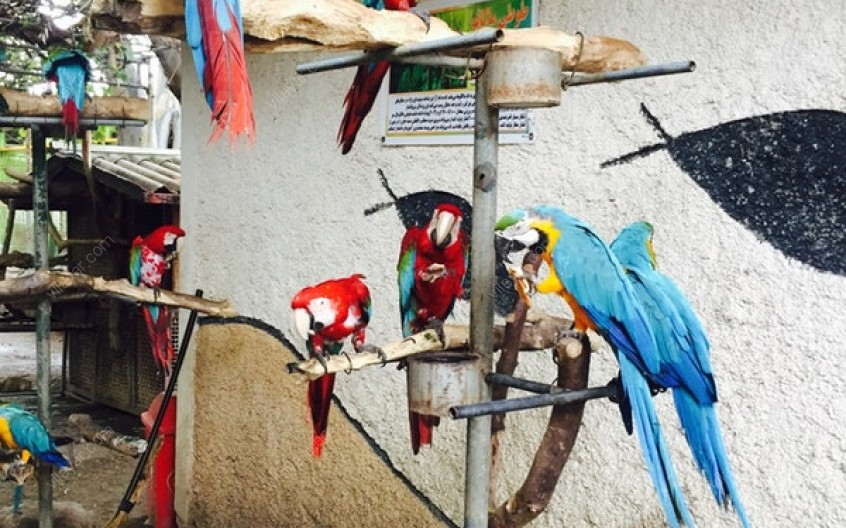 دیدار از باغ وحش کوچک بابلسر با حیوانات وحشی و اهلی