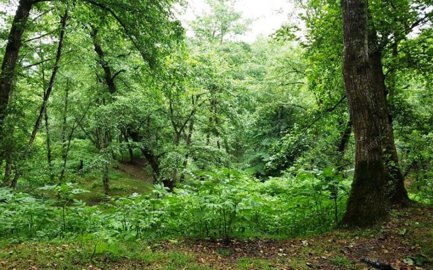 لذت قدم زدن در جنگل لفور، جاذبه 40 میلیون ساله بابل و سوادکوه